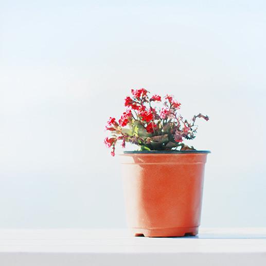 微信头像植物高雅