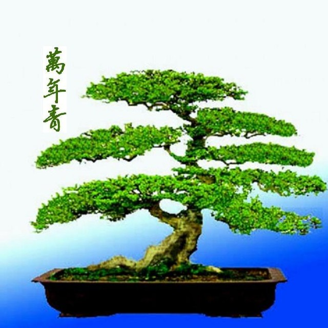 微信头像造型植物