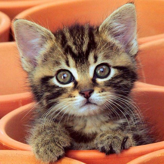 猫咪微信头像手绘