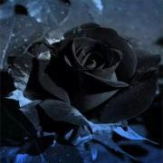 带黑玫瑰的头像_黑玫瑰头像